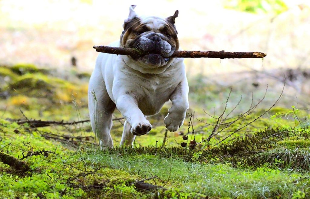dog, pet, batons