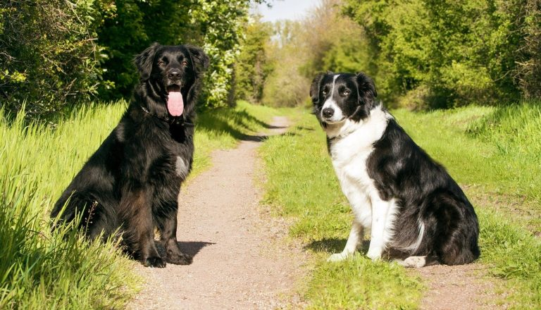 dogs, animal portrait, pet