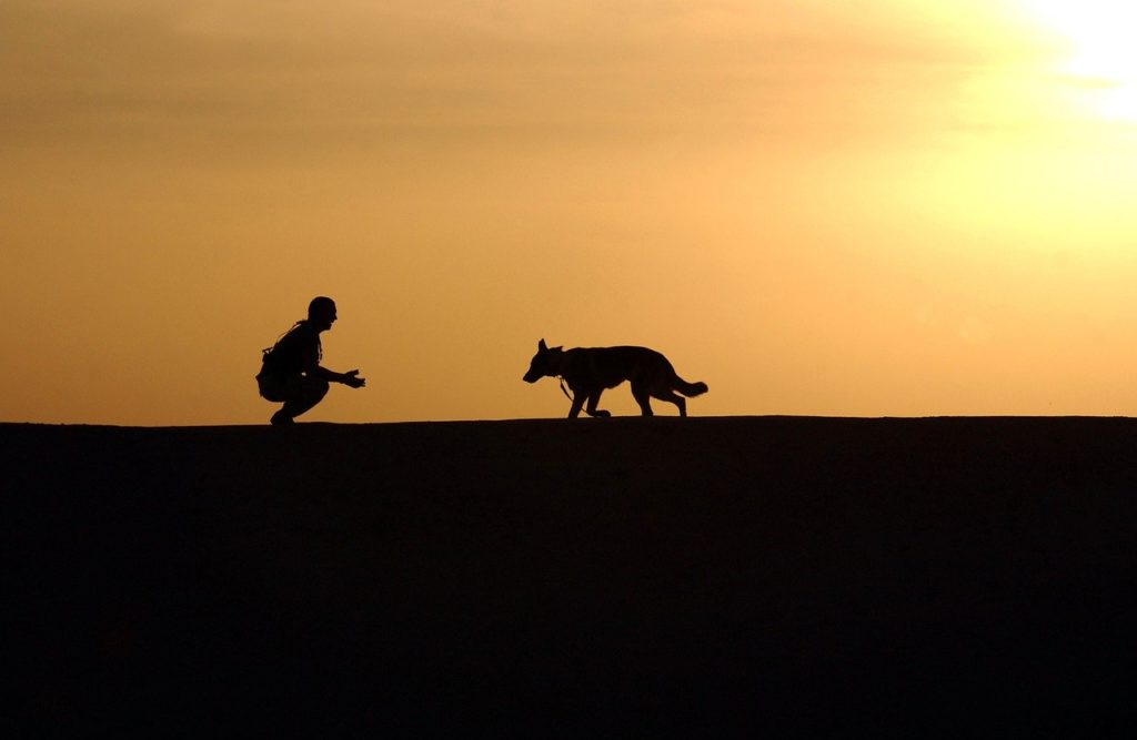 dog, trainer, silhouettes