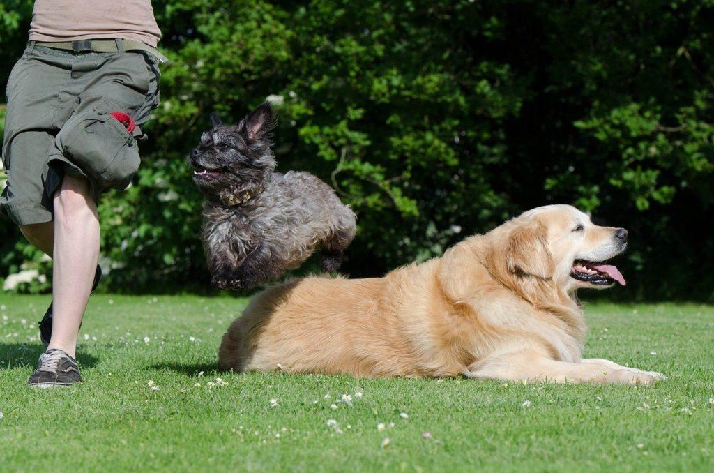 dog trick, tricks, dog show trick
