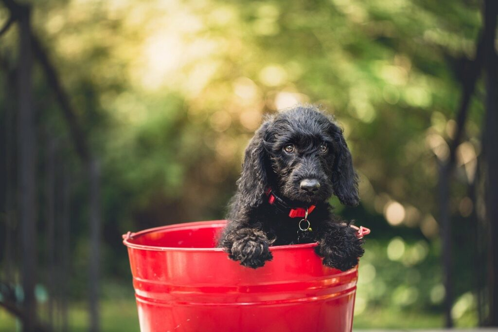 adorable, dog, bucket